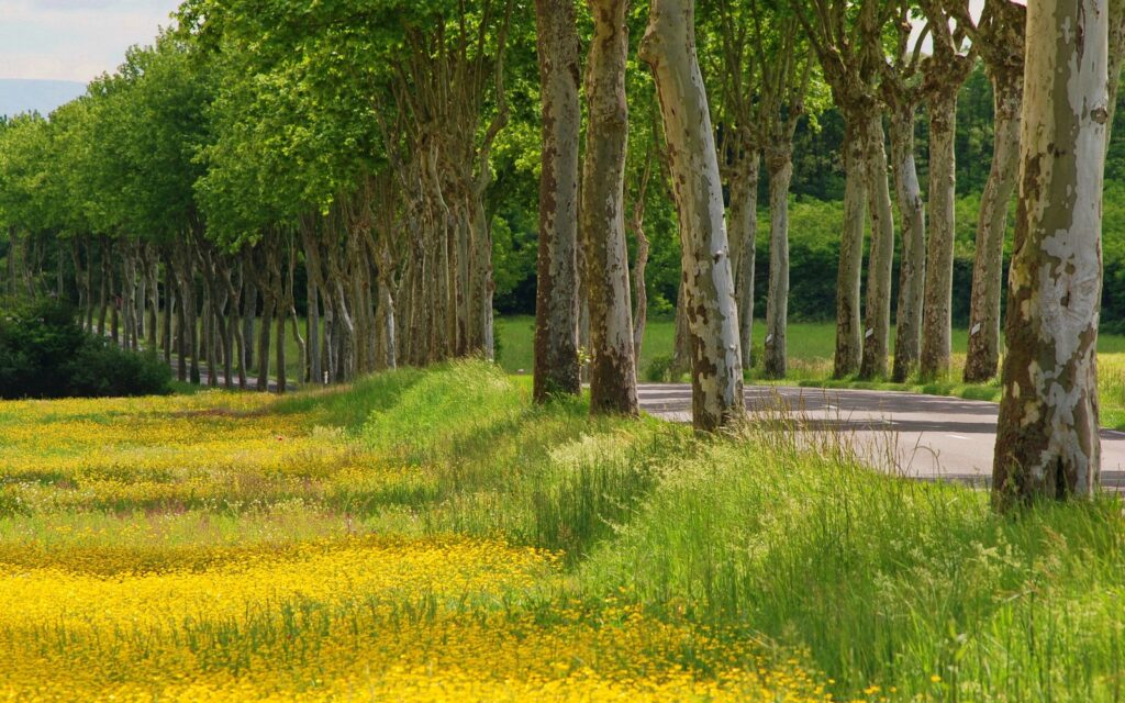 Improving Your Relationship With Money. Beautiful row of trees along a road and a yellow autumn field