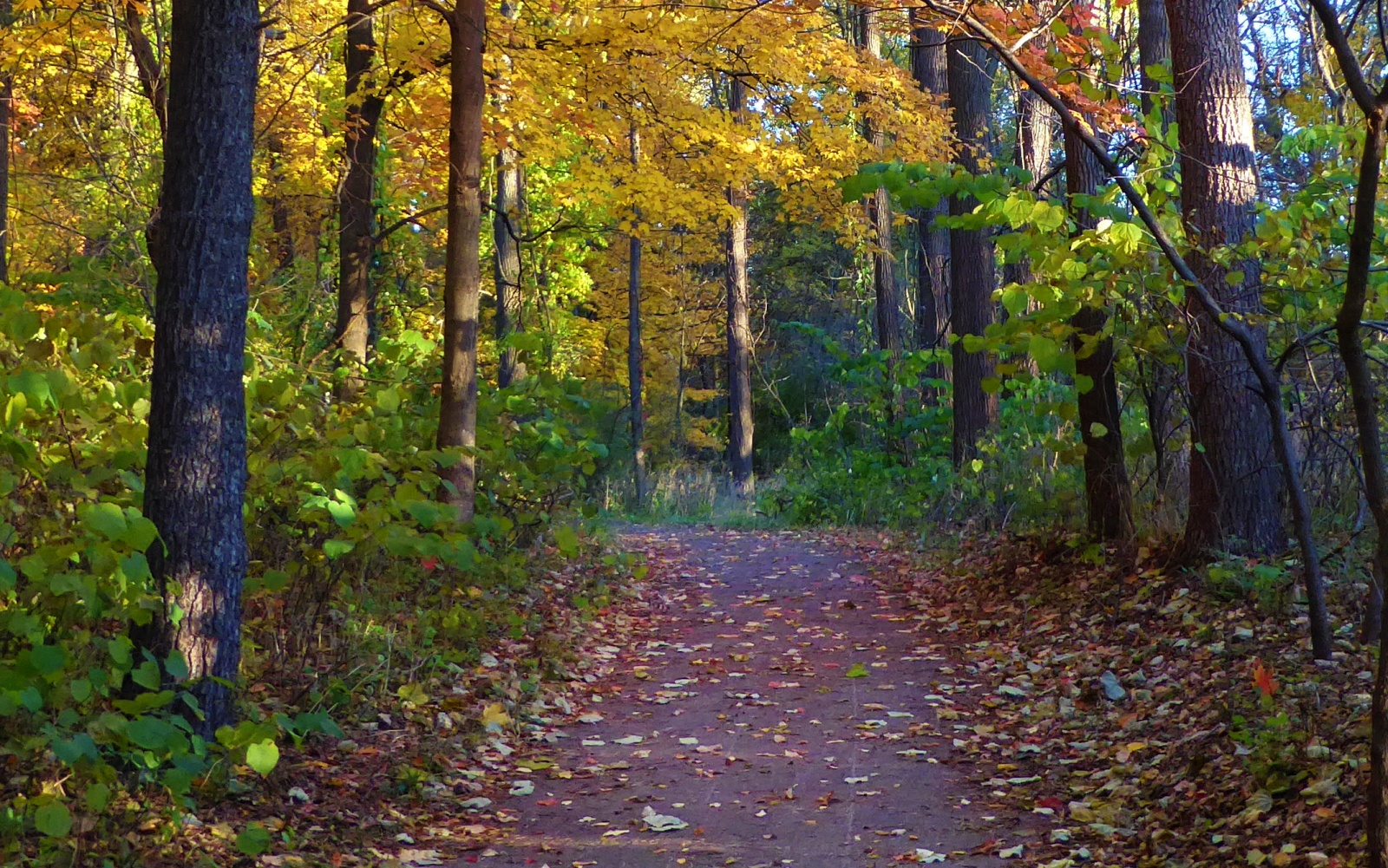 State Of Michigan Health Plan. Michigan woods with path in fall.